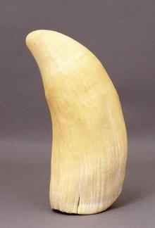 Vintage Eskimo Whale Tooth Scrimshaw