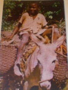 1960 The Little Woodman,Jamaica,B.W.I.