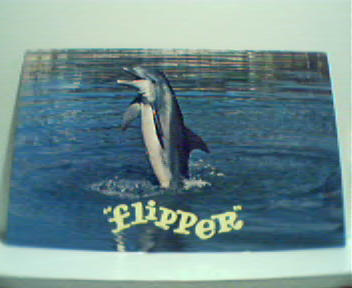 Flipper Star of MGM TV Program in Photo!