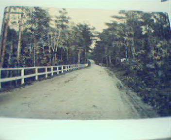 Magnolia Road between Gloucester/Magnolia!
