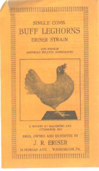 Single Comb Buff Leghorns Brochure 1914