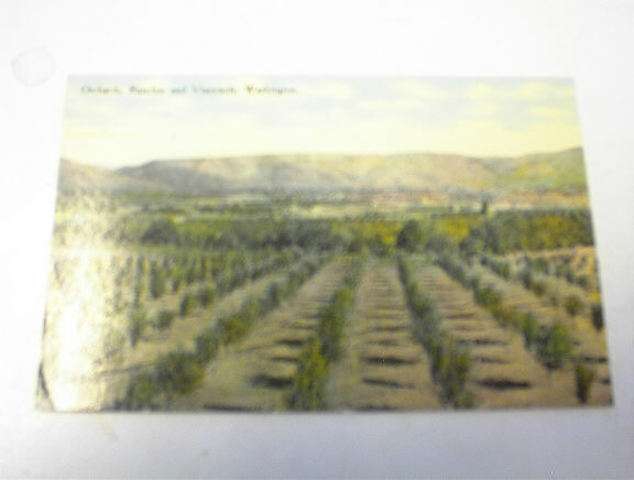 Orchards,Ranches and Vineyards,Wash,1900's