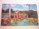 Flamingos At Hialeah Racetrack in Florida