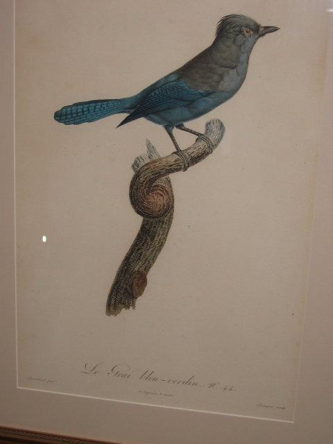 Original Jacques Barraband Bird Engraving
