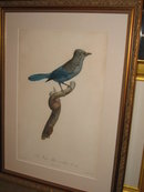 Original Jacques Barraband Bird Engraving