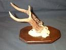 Horn Rack