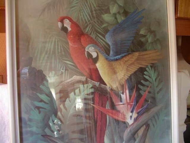 Parrots and Birds of Paradise 17