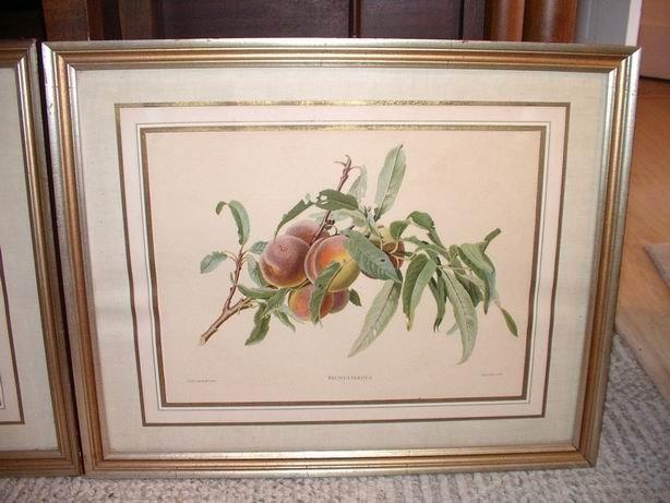 Pair of Old Fruit Prints Framed