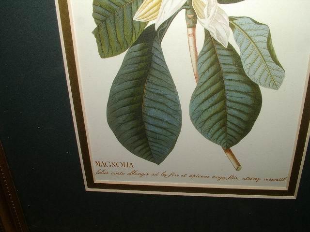 Magnolia Prints in 21