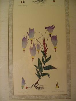 Vintage Dan Mitra Botanical Etchings **Sets of 3**