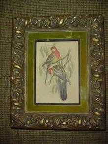 Vintage T. Gould Bird Print w/Frame