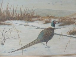 Original Pheasant  Painting **Signed