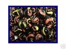 TWISTER MARBLES ONE BAG