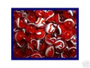 ROOSTER MARBLES 5/8 INCH  60  RED & WHITE