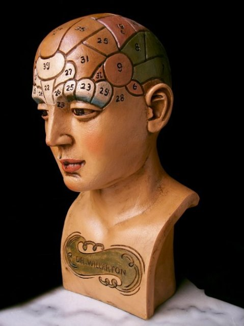 REALISTIC LOOK DR WILLARTON STONE RESIN PHRENOLOGY HEAD