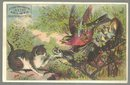 Victorian Trade Card Conners Brothers Shoes with Cat and Birds Nesting in Shoe