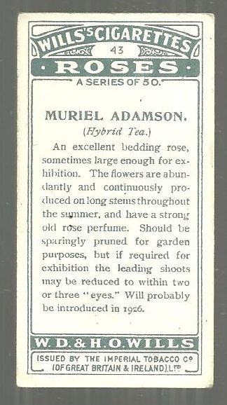 Vintage Wills' Cigarette Card for Muriel Adamson Tea Rose #43