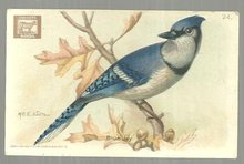 Victorian Trade Card for Cow Brand Baking Soda Useful Birds The Blue Jay