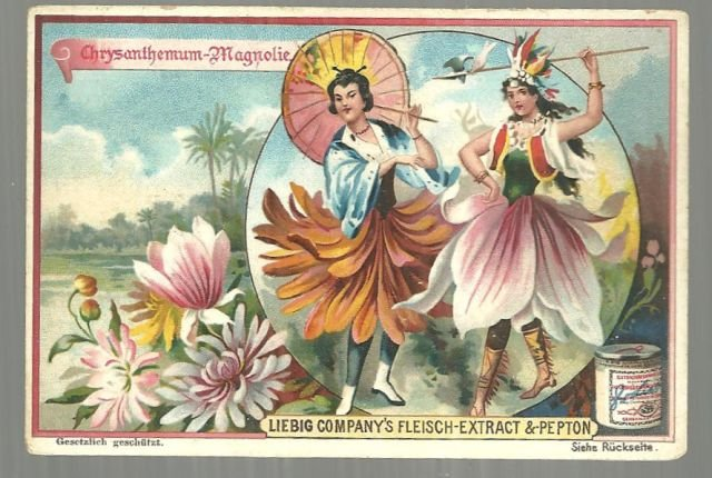 Victorian Trade Card Liebig Co Fleisch-Extract Chrysanthemum and Magnolia Ladies