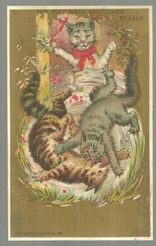 Victorian Trade Card with Cat Fight For Pity Sake Gentleman Be Calm