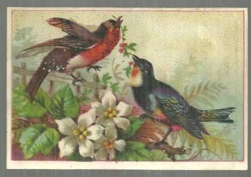 Victorian Trade Card for Diamond Dyes with Two Bird in the Garden