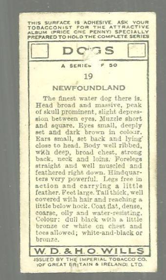 Vintage Wills' Cigarette Card with Newfoundland Dog #19