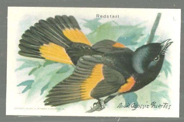 Victorian Trade Card for Arm and Hammer Useful Birds of America The Redstart