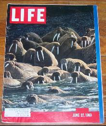 Life Magazine June 27, 1960 Alaskan Walrus on cover