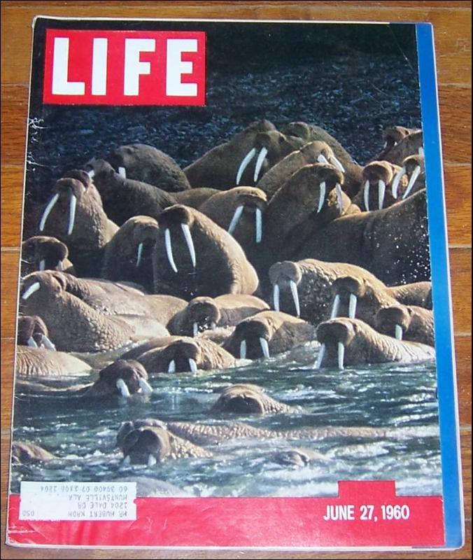 Life Magazine June 27, 1960 Alaskan Walrus on cover
