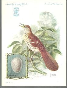 Trade Card Singer Sewing Machine American Song Birds Series Brown Thrasher