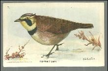 Victorian Trade Card for Church and Dwight Cow Brand, Baking Soda Horned Lark