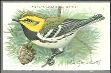 Victorian Trade Card Church and Dwight Cow Brand Black Throated Green Warbler