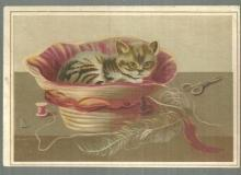 Victorian Trade Card For Lion Coffee with Kitten in Sewing Basket