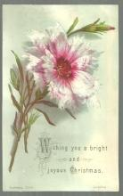 Victorian Raphael Tuck Christmas Card with Carnation Bright and Joyous Christmas