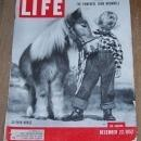 Life Magazine December 22, 1952 30 Inch Horse On Cover Horses Smaller Than a Dog