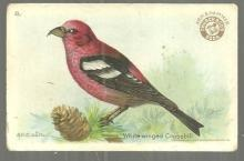 Victorian Trade Card Church and Dwight Cow Baking Soda White-Winged Crossbill