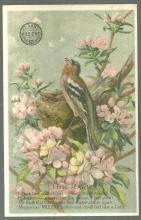 Victorian Trade Card for Clark's Mile End Spool Cotton with the Lark