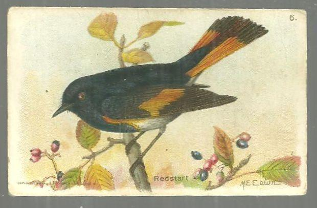 Victorian Trade Card for Arm and Hammer Useful Birds of America Redstart 8th Series #5