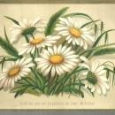 Victorian Birthday Greeting Card with Daisies Wishing You All Happiness