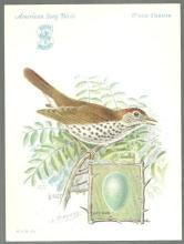 Victorian Trade Card for Singer Sewing Machine Song Birds Series Wood Thrush