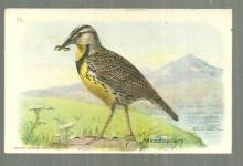 Victorian Trade Card for Arm and Hammer Useful Birds of America Meadowlark