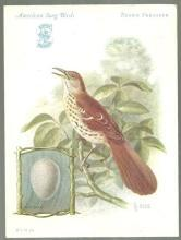 Victorian Trade Card for Singer Sewing Machine Song Birds Series Brown Thrasher