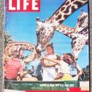 Life Magazine August 1, 1960 Safari in New US Fun Spot on cover/Space Suit