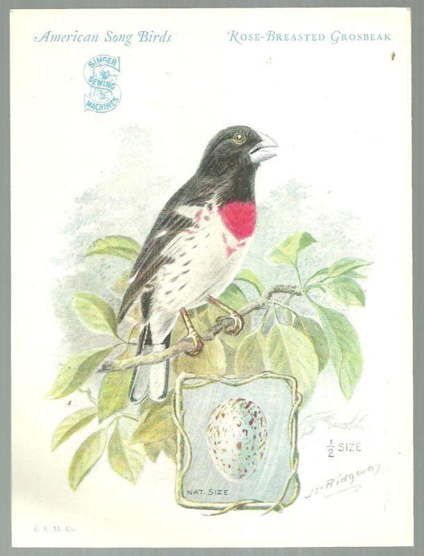 Victorian Trade Card Singer Sewing Machine Bird Series Rose Breasted Grosbeak