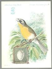 Victorian Trade Card Singer Sewing Machine Bird Series Yellow-Breasted Chat