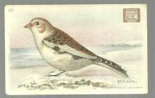 Victorian Trade Card Church and Dwight Cow Baking Soda The Snow Bunting