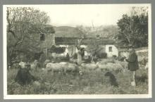 Real Photo Postcard Sheep Farmers Their Dog at Casa de Campo Mallorca, Spain
