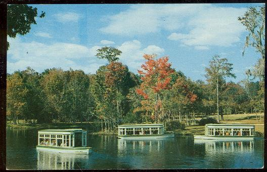 Vintage Unused Postcard of Down River Scene at Florida's Silver Springs