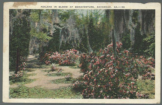 Unused Vintage Postcard of Azaleas in Bloom at Bonaventure, Savannah, Georgia