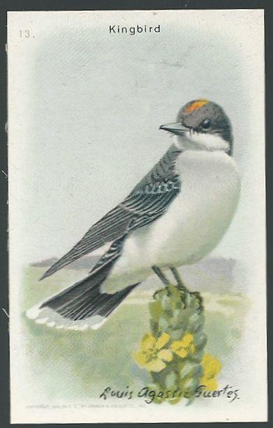 Victorian Trade Card for Arm and Hammer Useful Birds Series The Kingbird